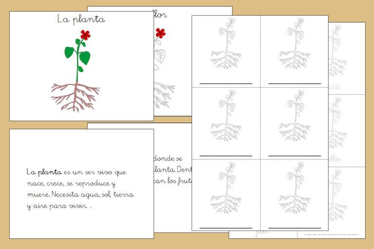 Libro Nomenclatura de las partes de la planta