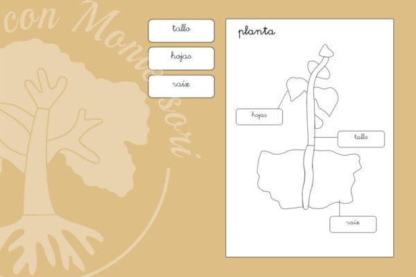 Puzzle Montessori de las partes de la planta