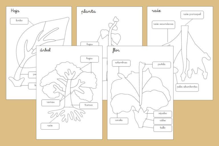 Plantillas para los puzzles de botánica Montessori