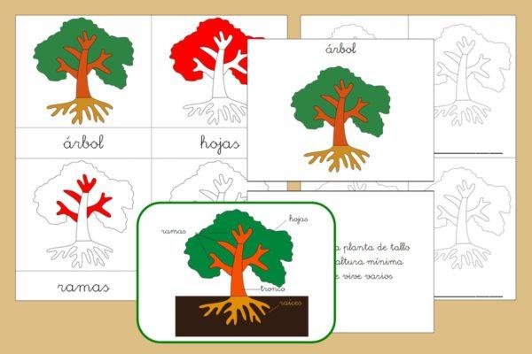 Tarjetas Montessori de las partes del Árbol + Libro Nomenclatura