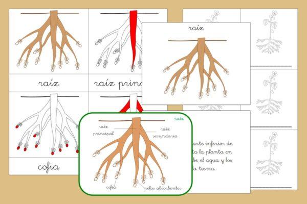 Tarjetas Montessori+ libro de las partes de la Raíz