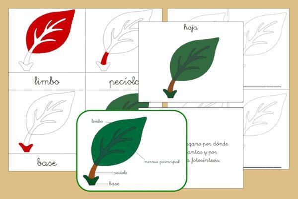 Tarjetas Montessori+ libro de las partes de la Hoja