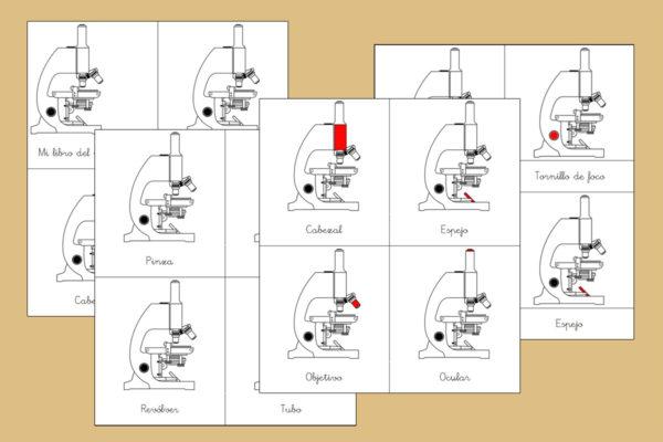Tarjetas Montessori de las partes del Microscopio