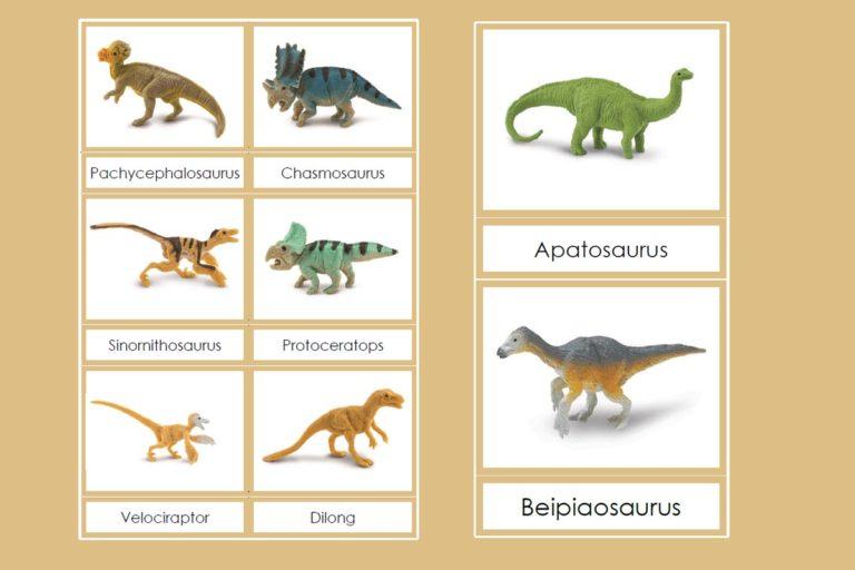Tarjetas Montessori de Dinosaurios Emplumados – Safari Ltd