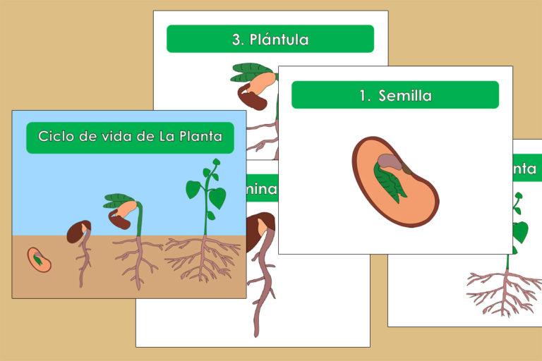 Libro Nomenclatura del Ciclo de Vida de la Planta