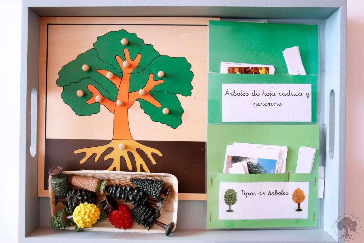 Tipos de rboles imprimible creciendo con montessori for Arboles frutales de hoja perenne