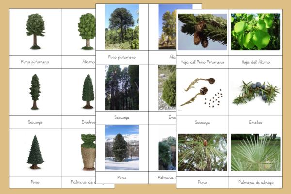 Tarjetas Montessori de los Tipos de Árboles